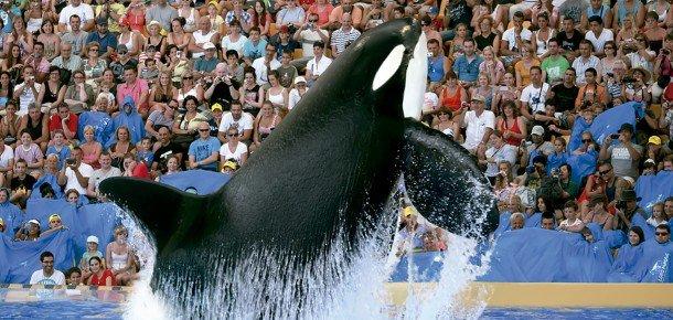 Loro Parque Orca