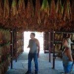 Finca El Sitio Tobacco Leaf Drying Shed