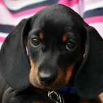 Animal Refuges & Charities in Tenerife